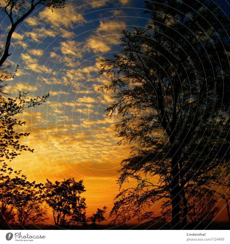 el atardecer de oro Silhouette Sonnenuntergang Schatten blau orange gold Himmel