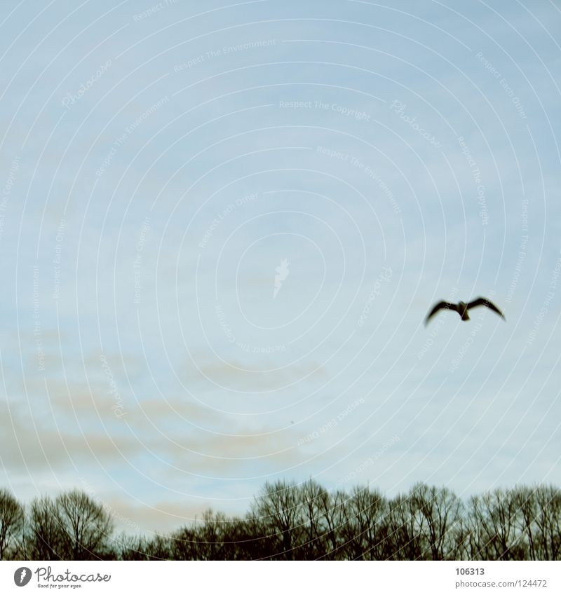 LONELY SEAGULL Möwenvögel Tier Luft Ozon Schweben fahren flattern gleiten Segeln baumeln rein Unbeschwertheit Meer Wellen Symbole & Metaphern Wolken Baum
