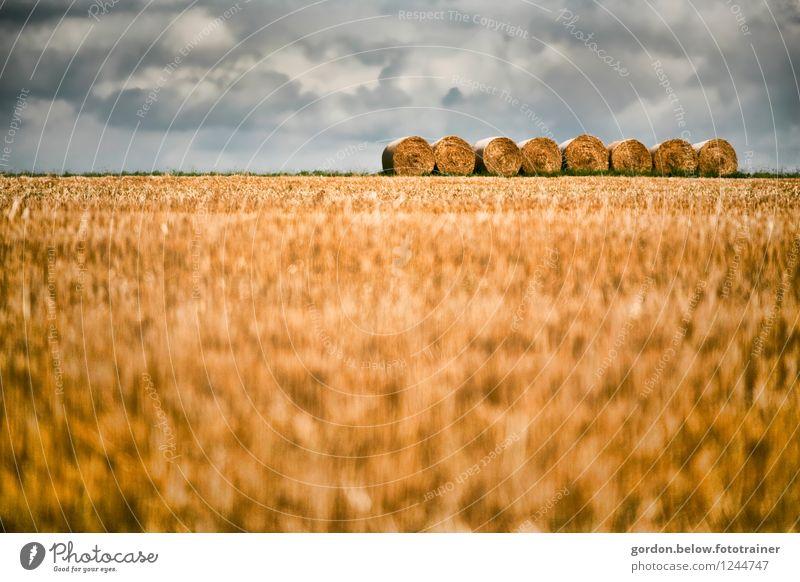 Stroh oder was? Getreide Sommer Landwirtschaft Forstwirtschaft Landschaft Wolken Gewitterwolken rund blau gelb ruhig Ordnungsliebe Strohballen Ackerbau Farbfoto