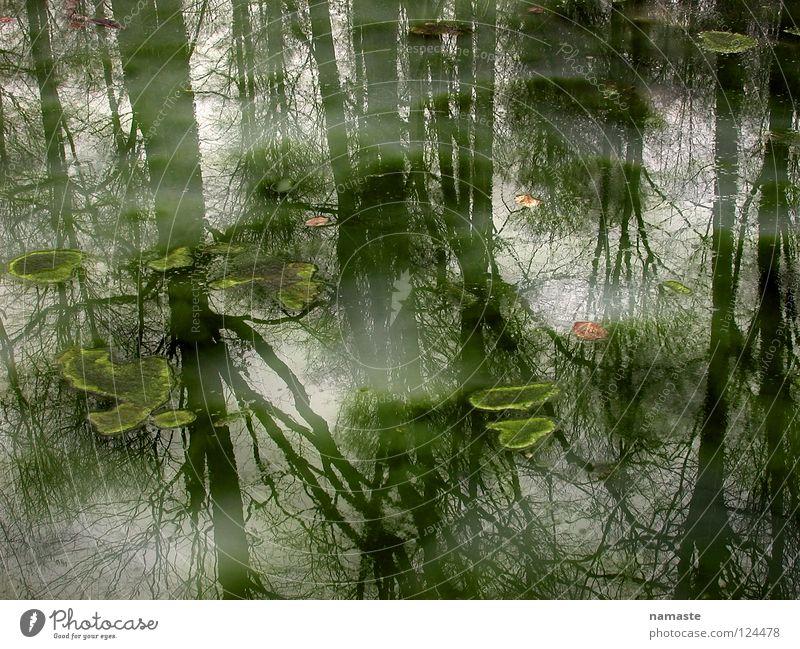 traumprinzenteich Natur Wasser schön Baum Sommer Stimmung Nebel verfaulen Teich mystisch Märchen trüb Traumprinz