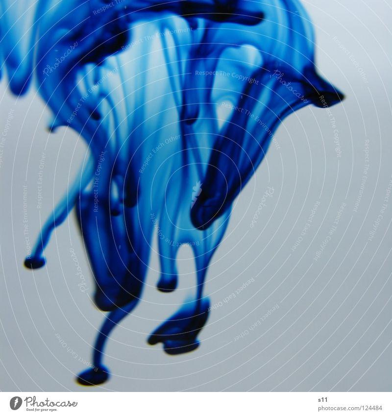 Blue In Water blau Wasser weiß Farbe nass Vergänglichkeit Spuren Flüssigkeit fließen mischen Lebensmittel Lebensmittelfarbe