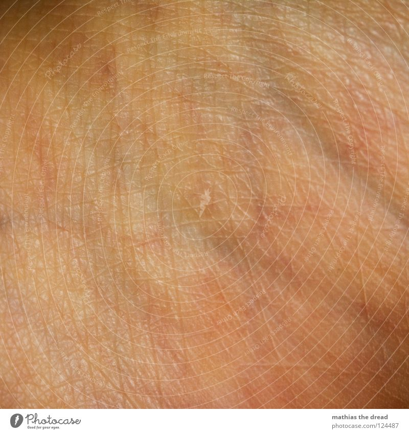 _EIN_STÜCK_MENSCH_ Silhouette Muster Pore klein Hautfarbe gezeichnet durcheinander Beleuchtung Gefäße Organ organisch rot Leben verzweigt Fleisch Makroaufnahme