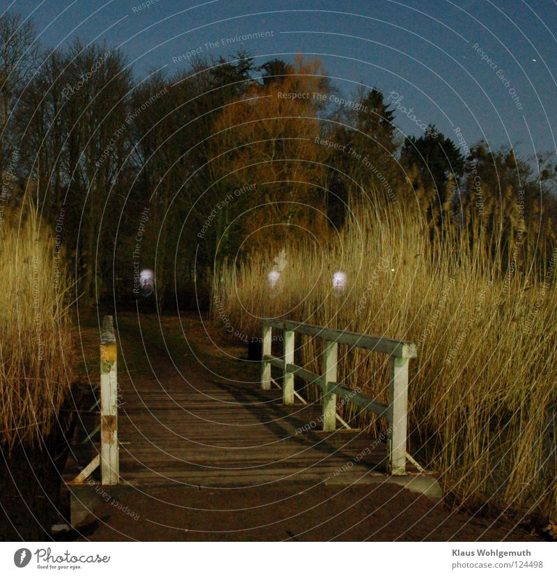face2 Nacht unheimlich mystisch Schilfrohr dunkel Brücke Geister u. Gespenster gruslig Elmsfeuer