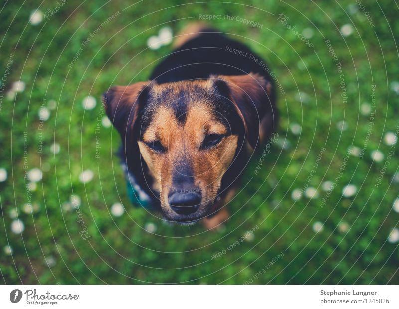 kleiner Hund Hund schön Sommer Erholung Blume Freude Tier Frühling Wiese Gesundheit Glück Garten Freundschaft Zufriedenheit frisch sitzen
