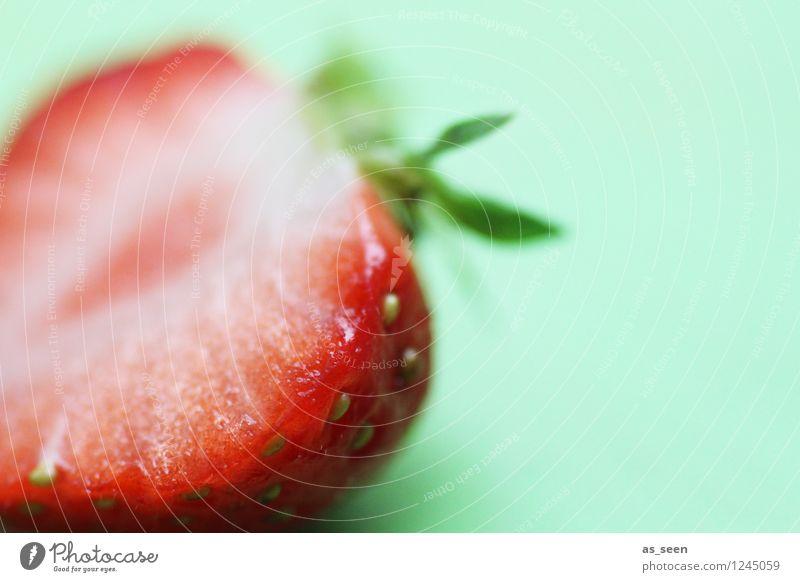 Erdbeere Natur schön grün Farbe rot Leben Gesundheit Lifestyle Lebensmittel Frucht frisch Ernährung genießen Wellness Bioprodukte harmonisch