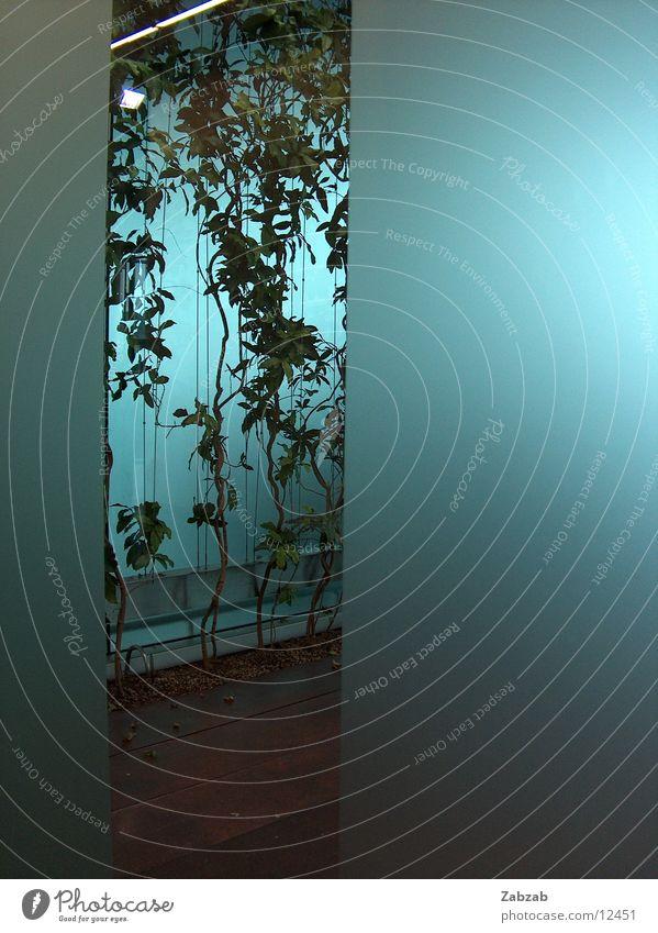 airport-pflanze Pflanze grün Licht durchsichtig Innenarchitektur Kunst Schweiz Europa hell-blau Blatt ästhetisch zyan Tanzfläche Innenaufnahme