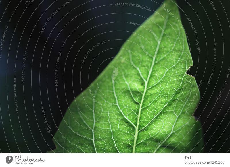 Blatt Natur Pflanze grün schön Sommer ruhig schwarz Frühling natürlich Design frisch elegant authentisch ästhetisch Blühend