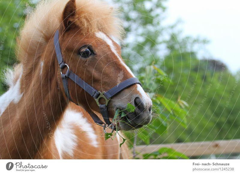 """My World Is Beautiful ! Tier Haustier Pferd 1 Tierjunges """"Aufmerksam Achtsamkeit"""" lecker natürlich Neugier niedlich Originalität Zufriedenheit Vertrauen"""