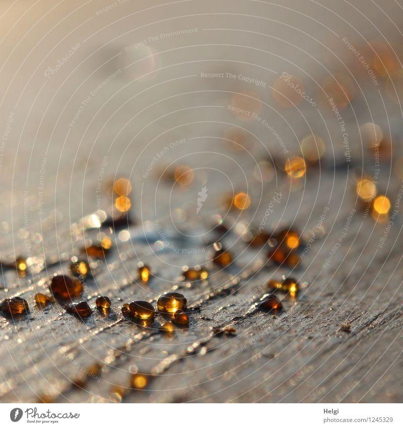 Goldtröpfchen Sommer Baumharz Tropfen Holz Linie glänzend leuchten liegen außergewöhnlich klein natürlich braun gelb gold grau ästhetisch bizarr einzigartig
