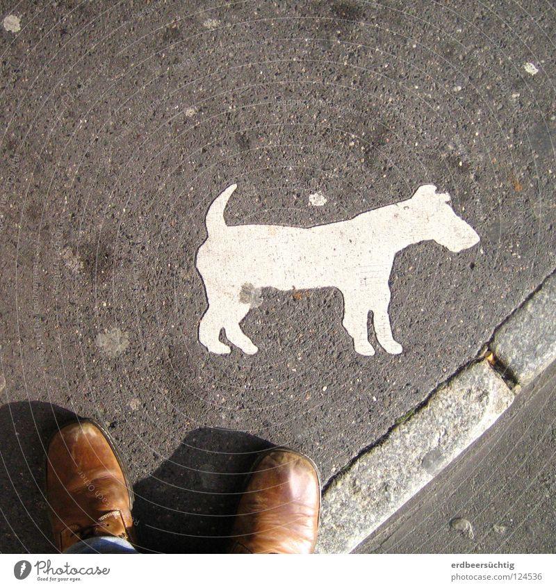 Warnung vor dem Hunde... Straße grau Schuhe Zeichen Konzentration Dienstleistungsgewerbe Frankreich Bürgersteig Verkehrswege Gesetze und Verordnungen absurd