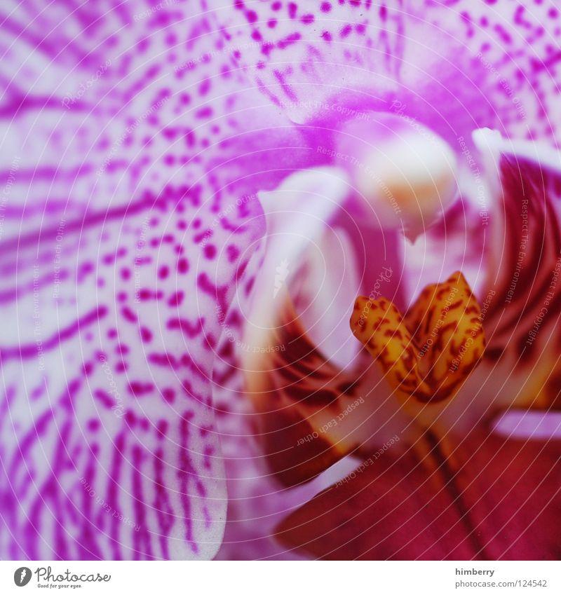 close pink up Natur Pflanze schön Farbe weiß Sommer rot Blume Frühling Blüte Hintergrundbild Wachstum frisch ästhetisch Blütenknospen Botanik