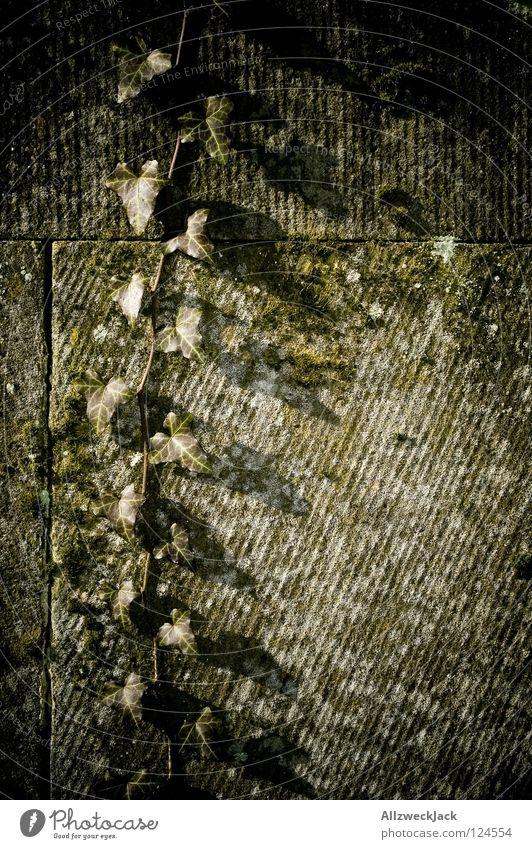hedera helix Natur grün Pflanze Blatt Wand Herbst Stein Wachstum Efeu Sandstein