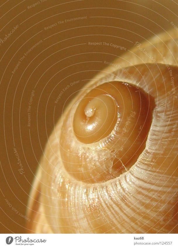 Einzimmerwohnung schön Tier Einsamkeit Tod leer rund drehen Schnecke Spirale Muschel hart Ornament rau Drehung Windung Kalk