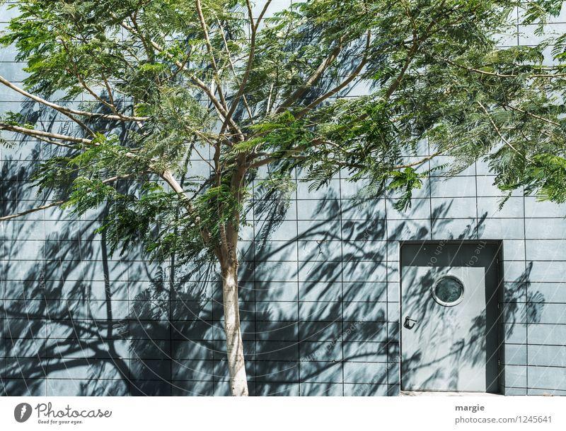 Eine geheimnisvolle Tür in einer Mauer, davor ein Baum mit Schatten Natur Sonne Schönes Wetter Wind Pflanze Blatt Grünpflanze Haus Wand Fassade Fenster blau
