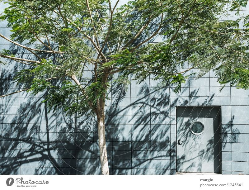 Tür zum Dschungelcamp Natur Sonne Schönes Wetter Wind Pflanze Baum Blatt Grünpflanze Haus Mauer Wand Fassade Fenster blau grün bizarr Hoffnung Idylle Schutz