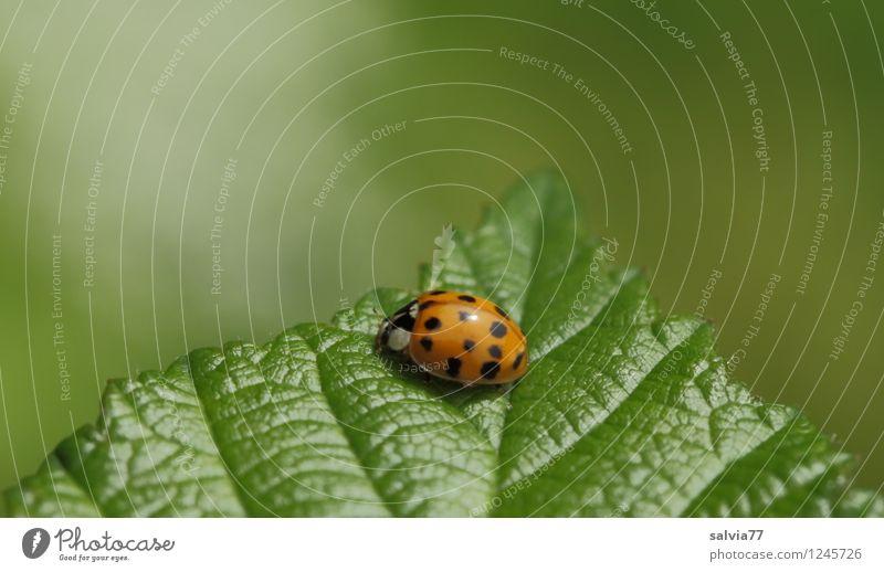 Lichtblick Natur Pflanze grün Sommer Blatt Tier Umwelt Frühling Glück klein oben rosa glänzend leuchten authentisch sitzen