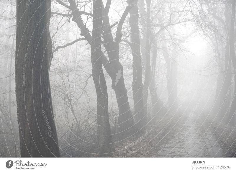 foggy woods #6 Nebel Einsamkeit kalt dunkel Baum Winter Wald nass feucht gefroren Natur Nebelstimmung ungewiss geheimnisvoll Querformat horizontal cold tree