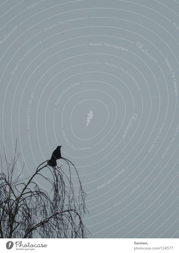 alleine abhängen Natur Himmel Baum blau ruhig schwarz Einsamkeit Erholung Denken Vogel Langeweile langsam Krähe