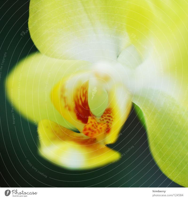 sauer flower Natur Pflanze schön Farbe weiß Sommer rot Blume Frühling Blüte Hintergrundbild Feste & Feiern Wachstum frisch ästhetisch Blütenknospen