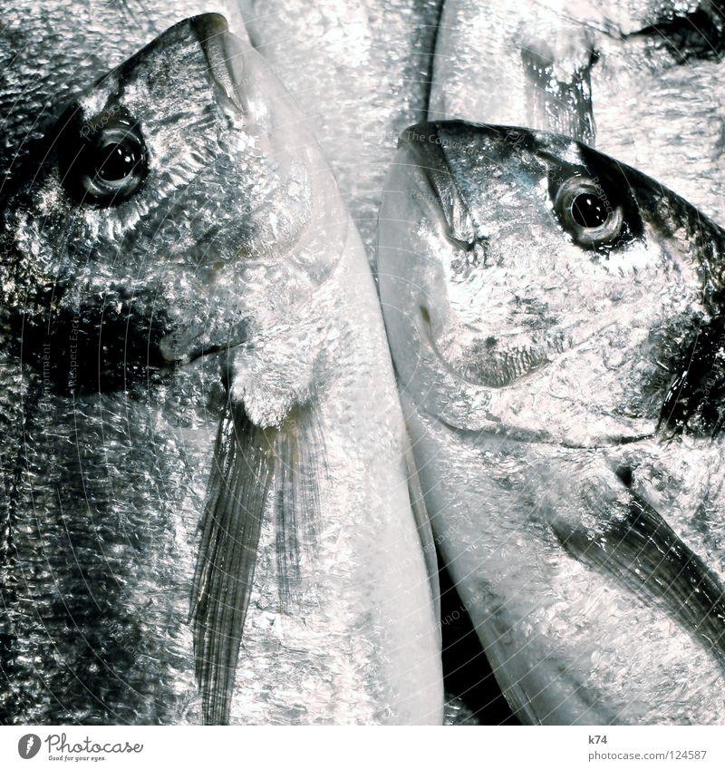 DORADE Dorade Fischmarkt Fischereiwirtschaft glänzend Meer kochen & garen Sushi Chrom Ernährung bauchen frische Fische fischt Fischers Fritz Fischauge fish