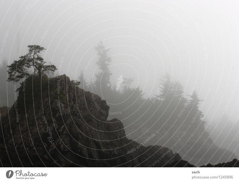 Küstennebel Ferne Natur Landschaft Pflanze Wasser Herbst Wetter schlechtes Wetter Nebel Regen Baum Wald Hügel Felsen Berge u. Gebirge Meer Pazifik Insel