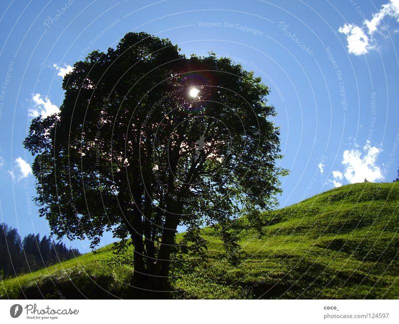 Sonnenschutz Schweiz Sommer Wiese Baum Berge u. Gebirge Safienthal