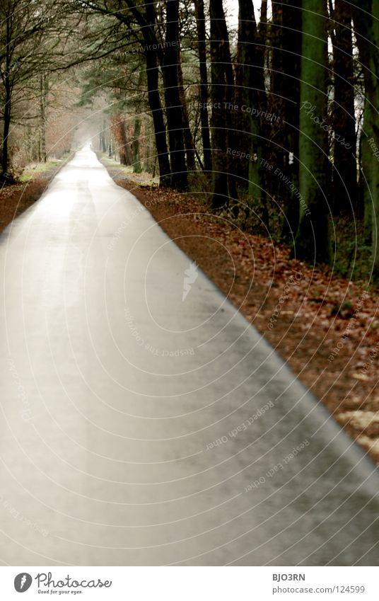 weg = ziel // dezentralisiert Winter Ferne Herbst Wege & Pfade Europa trist Spaziergang lang Tunnel Fußgänger