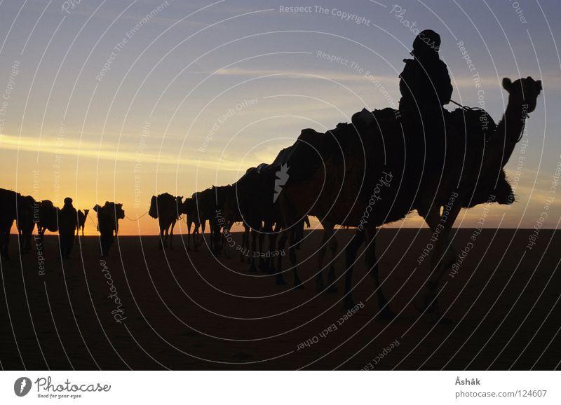 Karawane Sand Afrika Wüste Mensch Tier Sonnenuntergang Kamel Sahara Karavane Nomaden Niger Ténéré-Wüste