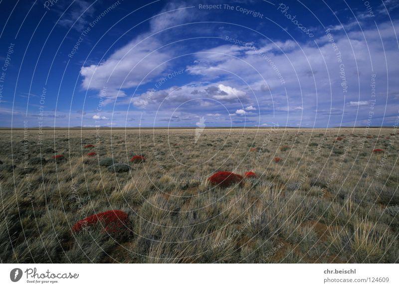 Die Pampa Ferne groß Weide Argentinien Südamerika Pampa