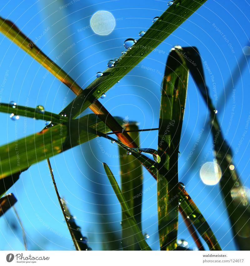 Gras und Tau Himmel grün blau kalt Wiese Wassertropfen nass Seil feucht