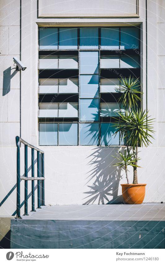 Überwachungskamera Fortschritt Zukunft High-Tech Informationstechnologie Pflanze Grünpflanze Topfpflanze Haus Mauer Wand Treppe Fassade Fenster Geländer