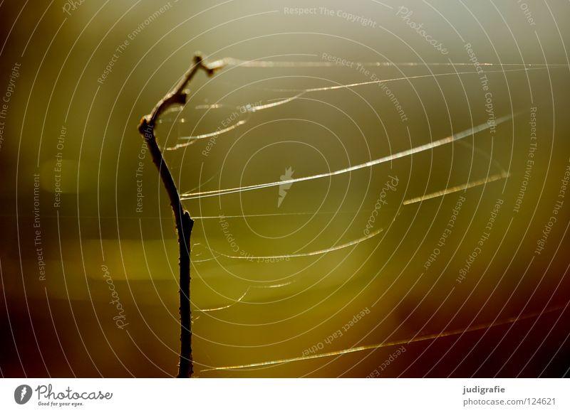 Versponnen Spinnennetz fein zart trocken Pflanze Stengel braun schwarz Umwelt Wachstum gedeihen Wiese schön dunkel Farbe Vergänglichkeit Nähgarn getrocknet