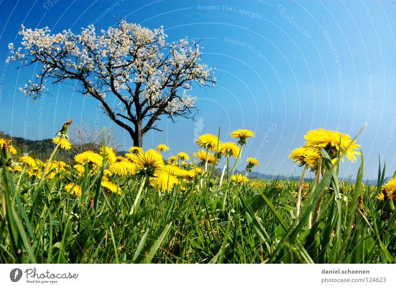 Marienkäferperspektive Baum Blume grün blau Sommer Ferien & Urlaub & Reisen gelb Wiese Blüte Gras Frühling Perspektive Rasen Pause Freizeit & Hobby Löwenzahn