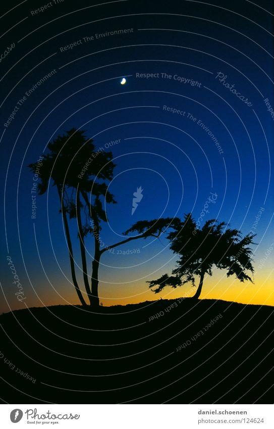 Mond blau Farbe Sonne Baum kalt gelb Küste Hintergrundbild Stimmung Freizeit & Hobby Wetter Luft Nebel Klima Sauberkeit Klarheit