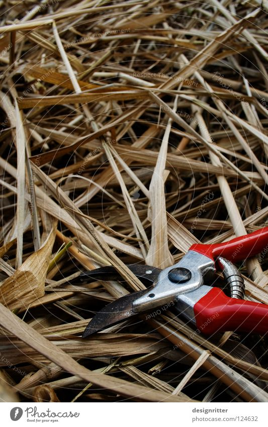 Braunschnitt schön Freude Gras Garten Luft Arbeit & Erwerbstätigkeit frisch mehrere viele Schilfrohr anstrengen Gartenarbeit geschnitten Schere Schlag Riedgras