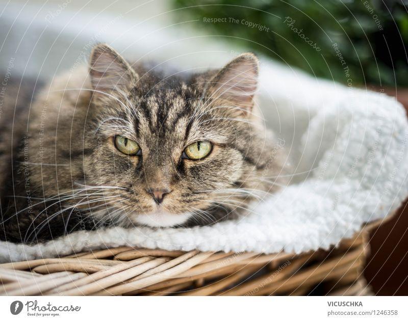Katze im Korb Stil Sofa Tier Haustier 1 Natur Häusliches Leben draußen Balkon Sommer Porträt Farbfoto Nahaufnahme Tierporträt Blick in die Kamera
