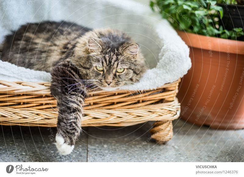 Katze liegt im Körbchen auf Garten Terrasse Design Freizeit & Hobby Sommer Haus Sofa Show Natur Frühling Schönes Wetter Pflanze Tier 1 gelb Katzenpfote liegen
