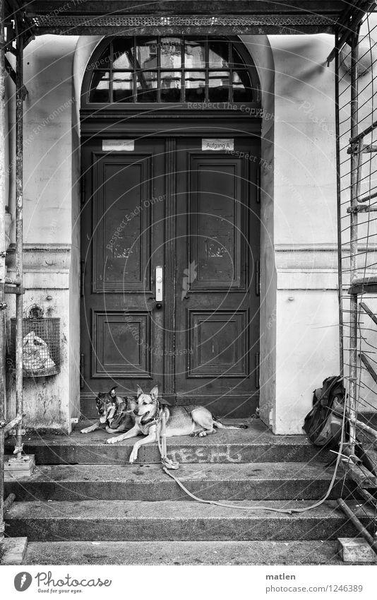 750 Stadt Menschenleer Haus Tor Mauer Wand Fassade Tür Tier Haustier Hund 2 schwarz weiß selbstbewußt Schäferhund Rucksack Hundeleine lang Papierkorb Baugerüst