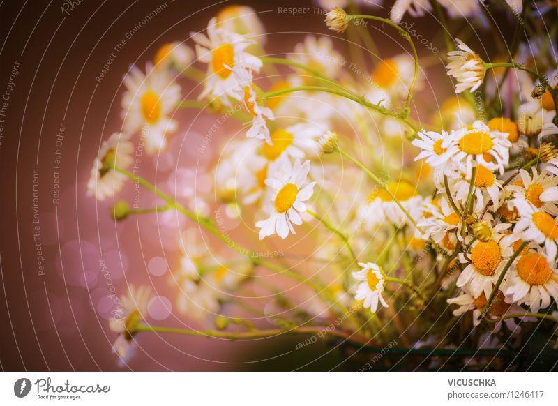 Wilde Kamille Blumenstrauß Natur Pflanze Sommer Blume Blatt gelb Frühling Blüte Wiese Stil Hintergrundbild Garten Park Design Kräuter & Gewürze Blumenstrauß