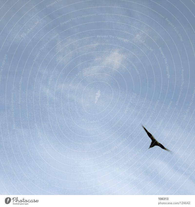 OBEN GEBLIEBEN IST NOCH KEINER Luftverkehr Umwelt Natur Himmel Wetter Küste Nordsee Wildtier Vogel Flügel 1 Tier kalt oben träumen Traurigkeit Heimweh Fernweh
