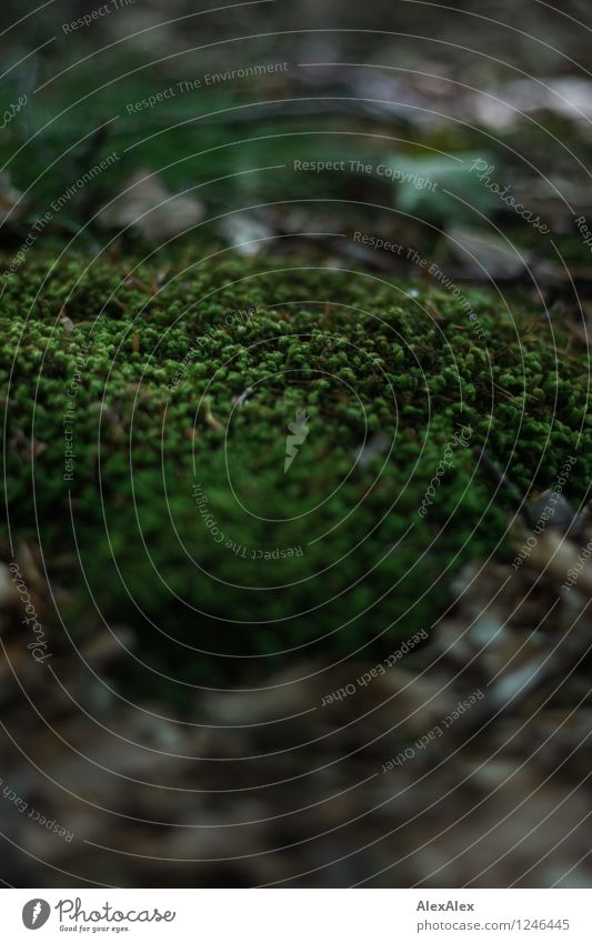 pZ3 | ohne Moos nix los Umwelt Natur Pflanze Schönes Wetter Moosteppich Blatt Waldboden Wachstum ästhetisch authentisch klein nah natürlich Sauberkeit grün