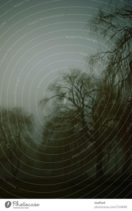 nebelwald ohne apfelbaum Friedhof Nebel Baum grau grün schlechtes Wetter Trauerweide Grabmal Beerdigung dunkel Einsamkeit verzweigt durcheinander Abschied Park
