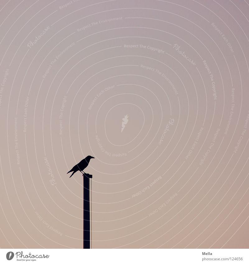 Wächter Vogel Krähe Rabenvögel Aaskrähe Fahnenmast hocken Blick Aussicht einzeln Einsamkeit sehr wenige leer ruhig Dämmerung Pastellton Silhouette Himmel Park