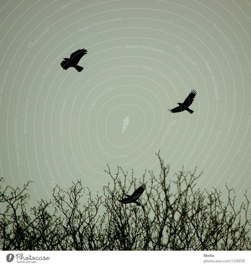 Abflug Baum Wolken Winter schwarz Wald kalt oben grau Vogel fliegen Beginn 3 Luftverkehr trist Ast Baumkrone