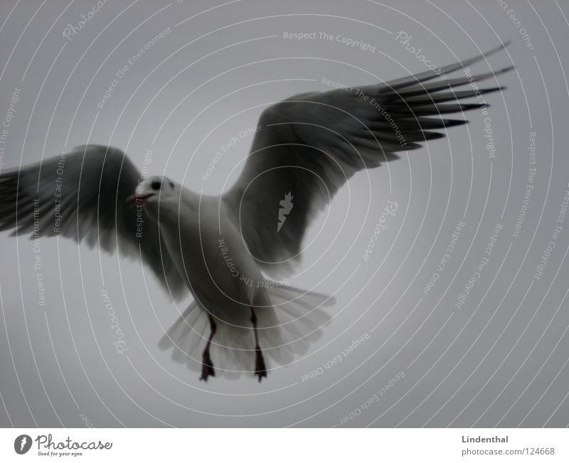 The Light Möwenvögel weiß dunkel Hoffnung Frieden Vogel Schwarzweißfoto bw black white scharz fliegen fly hell dark light Wege & Pfade