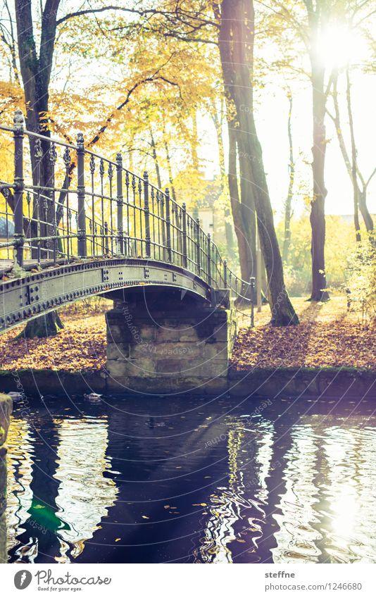 Oktober Natur Sonnenlicht Herbst Schönes Wetter Baum Park Wald Bach Fluss Brücke Idylle Herbstlaub Romantik Wärme Farbfoto mehrfarbig Außenaufnahme