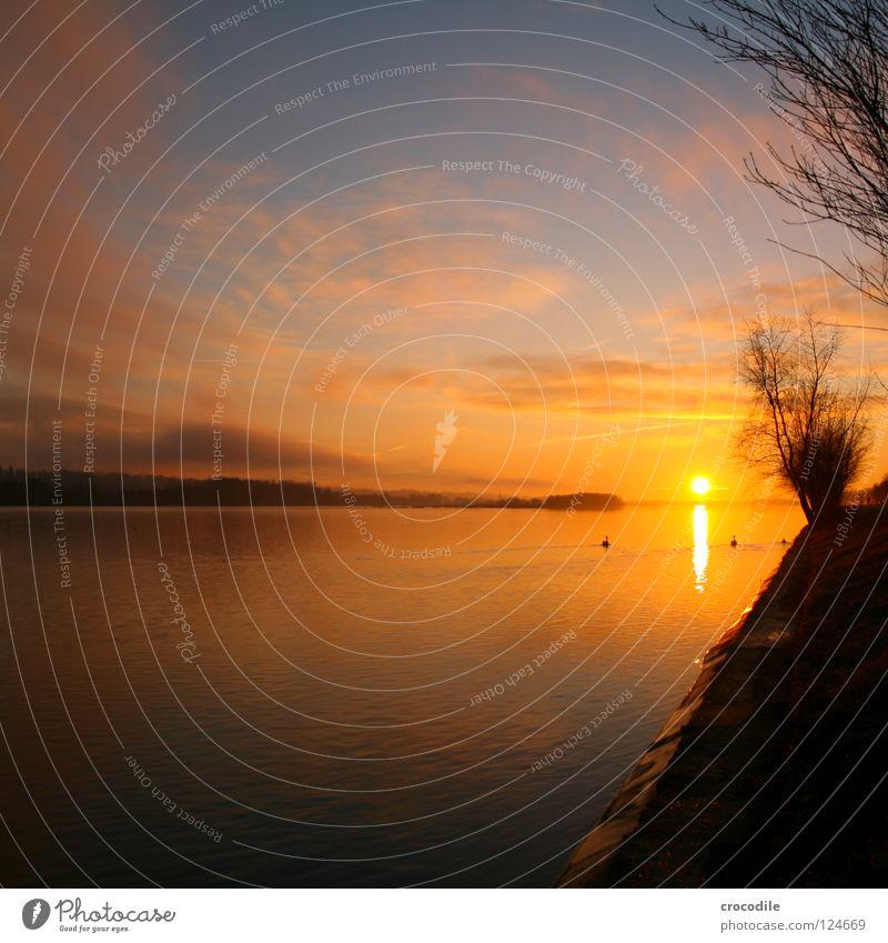 InnUfer Sonnenuntergang Vogel Biotop Grenze Österreich Baum Wolken Schwan Herbst Fluss Bach Himmel Stromkraftwerke Deutschland Weide Küste Zweig Ast Kitsch