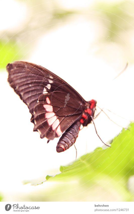 po Natur Pflanze schön Sommer Baum Erholung Blatt Tier Frühling Wiese Garten außergewöhnlich Beine fliegen Park Wildtier