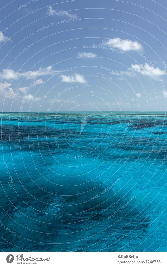 Blauton Expedition Menschenleer Außenaufnahme Farbfoto Karibik Belize Karibisches Meer Zufriedenheit blau Unendlichkeit ästhetisch entdecken Korallenriff Riff