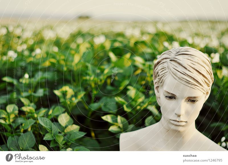 draussen, im kartoffelfeld . Gesicht Kopf Puppe Schaufensterpuppe falsch leblos kalt perfekt schön künstlich Kunststoff Kartoffelacker Landwirtschaft